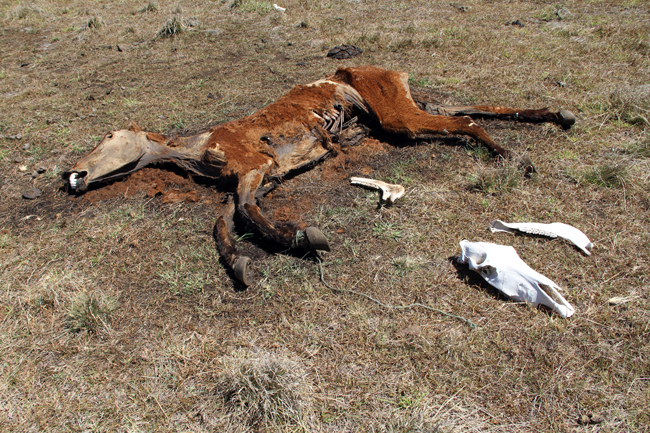 dead-horse.jpg