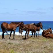 horses-alive2
